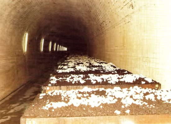 Mushrooms growing inside one of the Sleep's Hill tunnels.